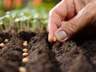 NEWSLETTER INSERT - SOWING SEEDS