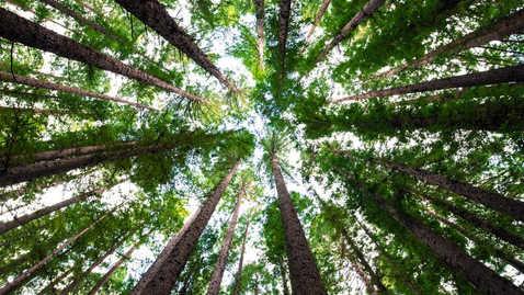 Regenerative conservation and reforestation