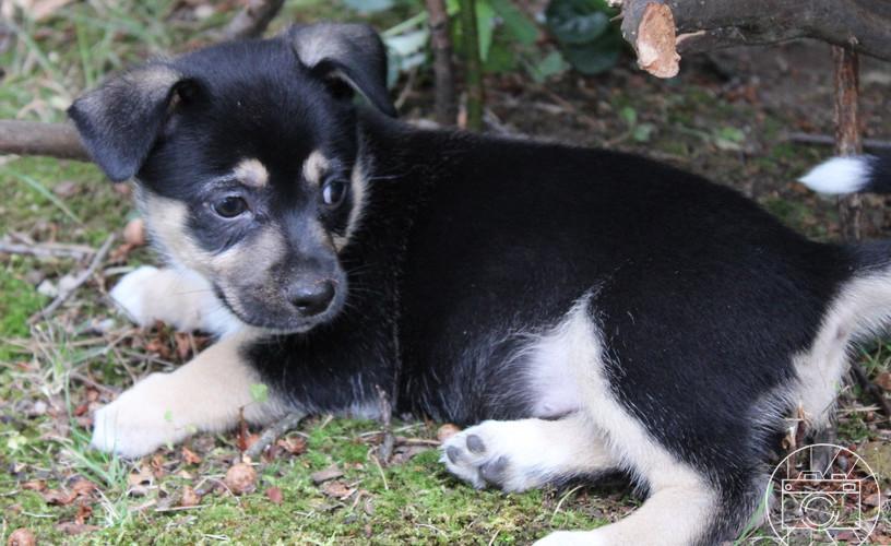 puppy_7logo.JPG