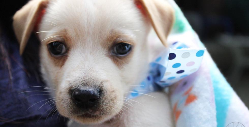puppy_3logo.JPG
