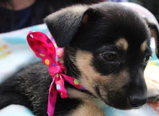 puppy_4logo.JPG