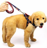 dog-leash.png
