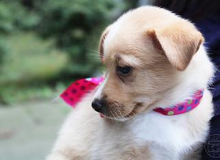 puppy_6logo.JPG