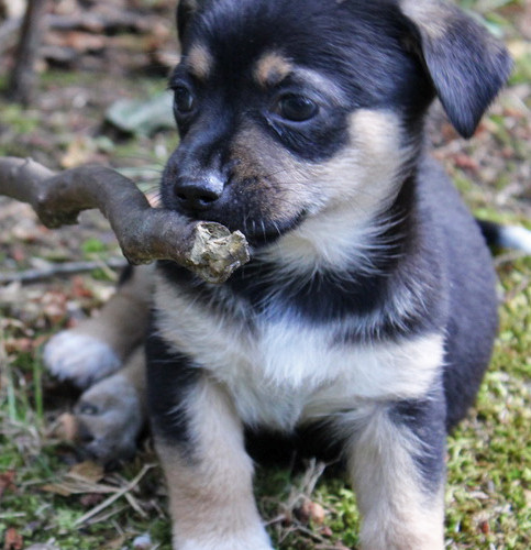 puppy_1logo.JPG