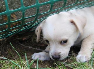 puppy_9logo.JPG