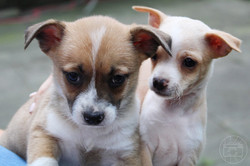 Kaitlyn volunteered her time and talent to photograph these adorable puppies to facilitate their ado