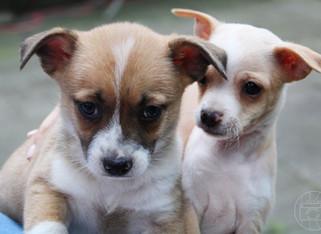 puppy_8logo.JPG