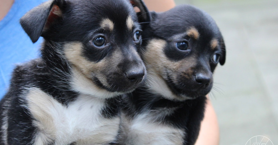 puppy_11logo.JPG