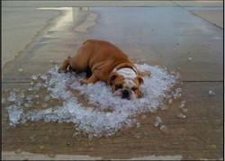 dog-ice.jpg