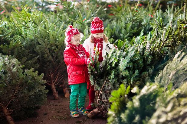 Family selecting Christmas tree. Kids ch