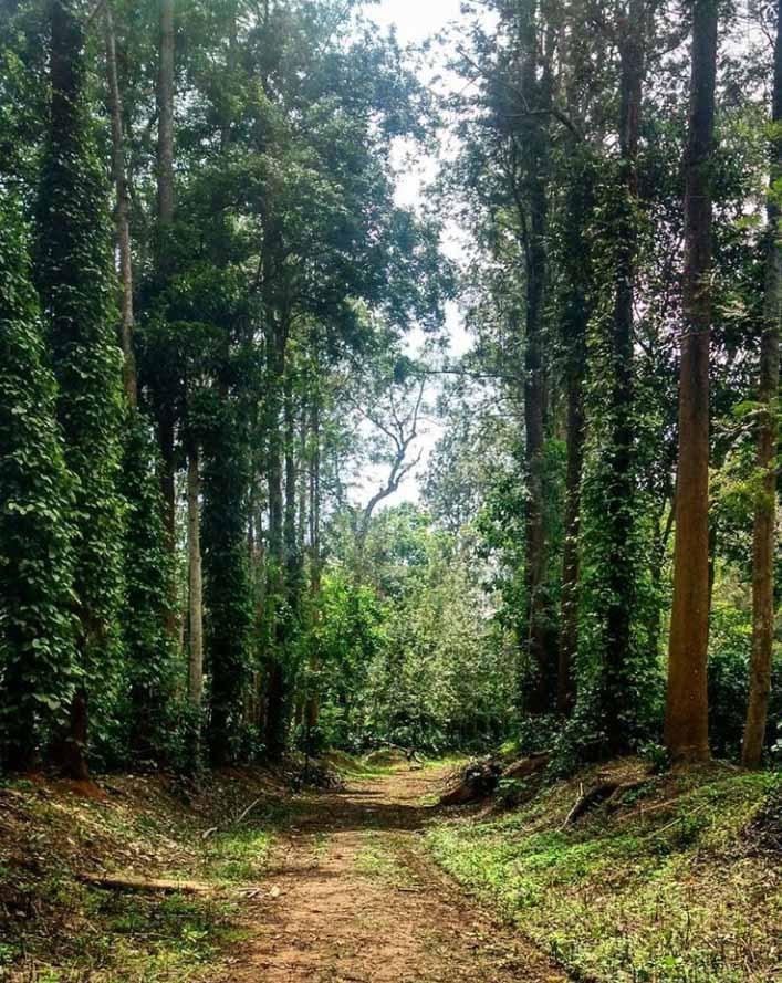 mercytrip  Coorg, Karnataka