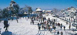 shimla  hotels, flights at mercytrip