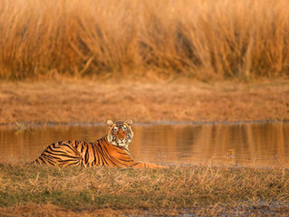 THE ULTIMATE GUIDE TO NATIONAL PARKS IN INDIA