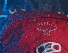Osprey image.png