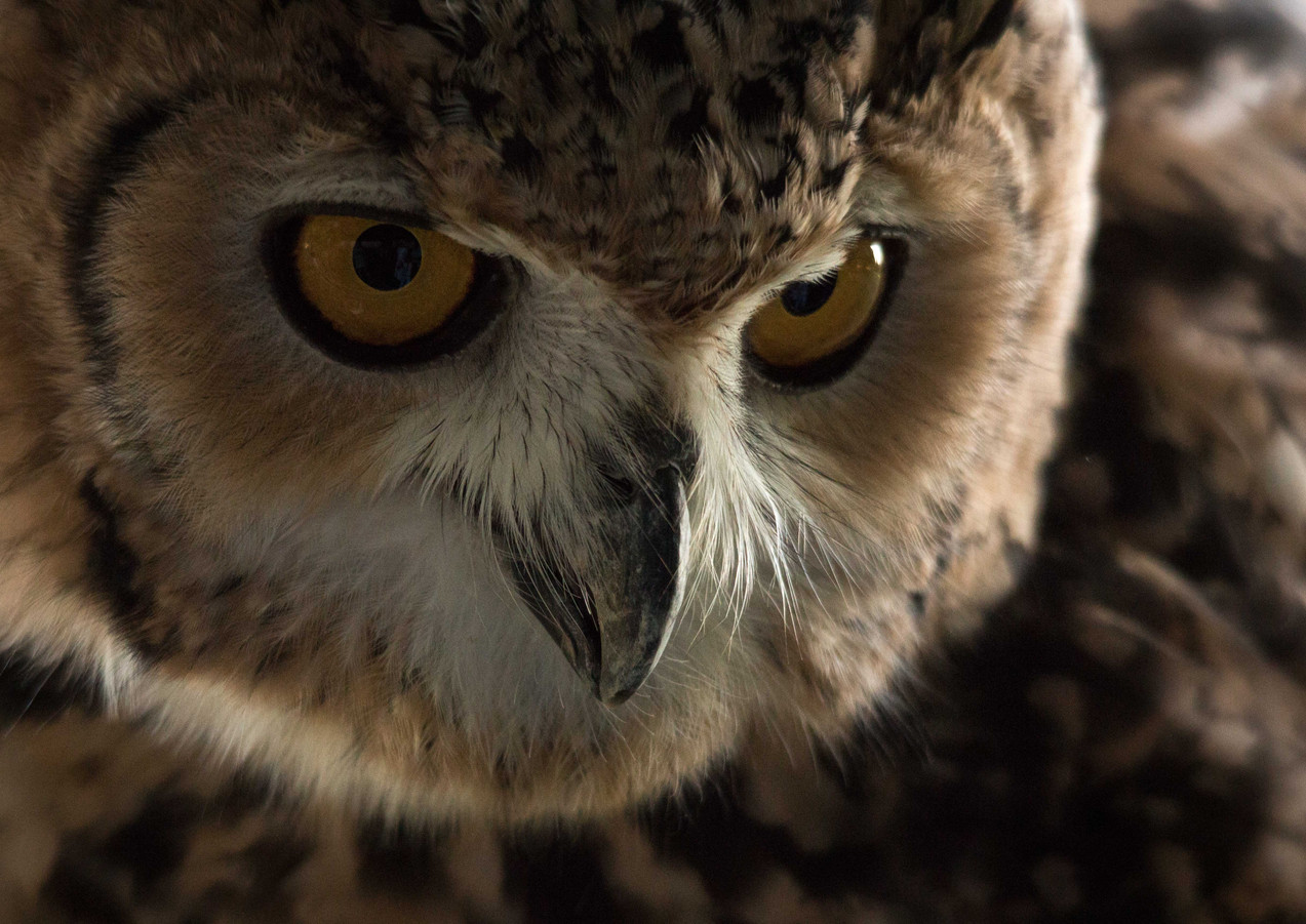 The Desert Eagle