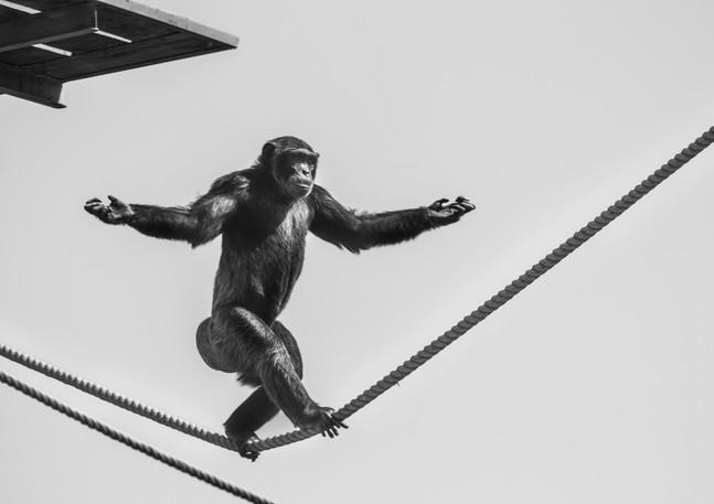 The Shaolin Monkey