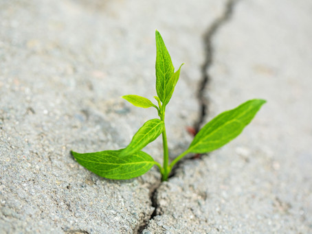 Time to Grow Up Part 2: Beyond Bible Reading
