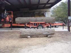 Bur Oak on Woodmizer301.JPG