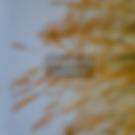 Copertnia paleo per store.png