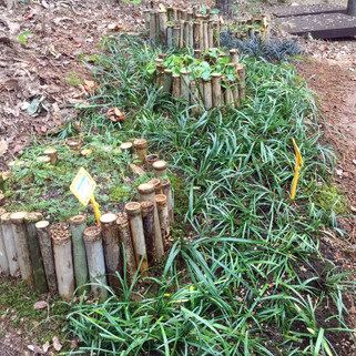 유아숲 조성공사