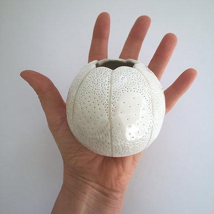 White Seed Pod