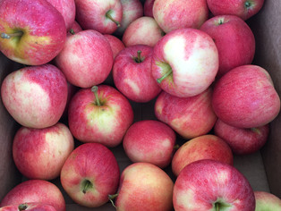 Apples: What Are Your Favorites?