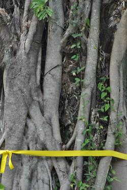 el árbol