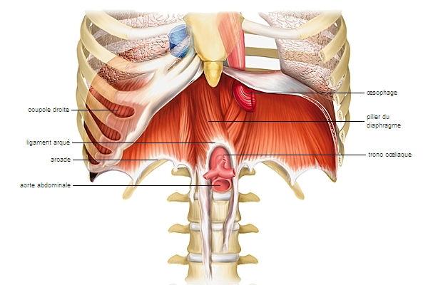 1001673-Diaphragme.jpg