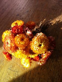 Golden Helichrysum
