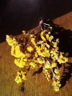 Yellow Statice