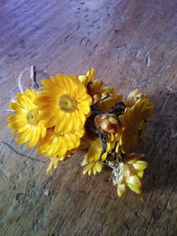 Dwarf Yellow Helichrysum