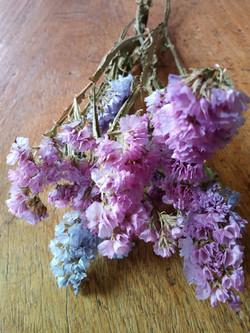 Lavender Statice