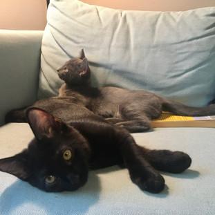 Nina and Otis Update