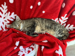 Christmas Julie-Cat