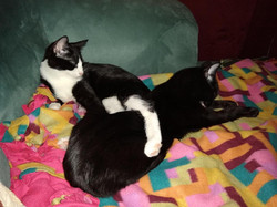 Zan & Jayna cuddling on couch blanket