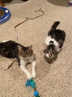 Iris and Bella