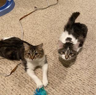 Rosemary and Katla (Now Iris and Bella) Update