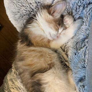 Alley Cat Update