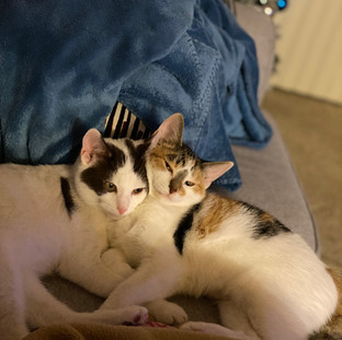 Olivia and Patches Update