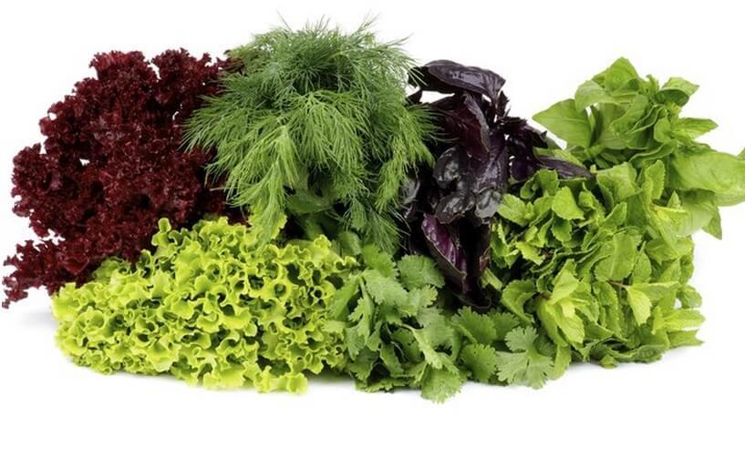 Excelentes Antioxidantes;
