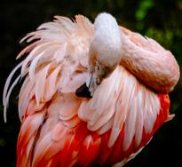 Pink Flamingo3.png
