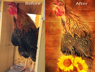 Before and After Photo