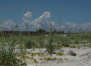 Little Talbot Island