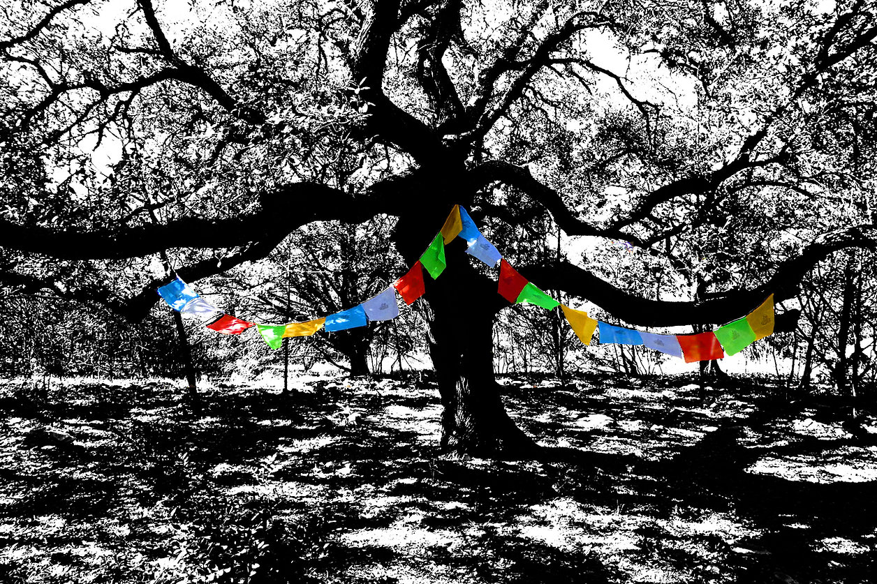 SD Arbor 12 2015 LITHandFlags.jpg