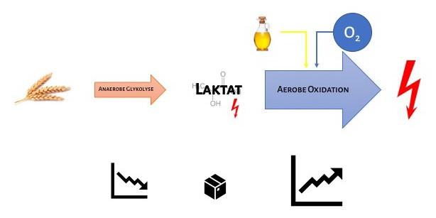Energiebereitstellung_Szenario 1_Langzeitausdauerbelastungen