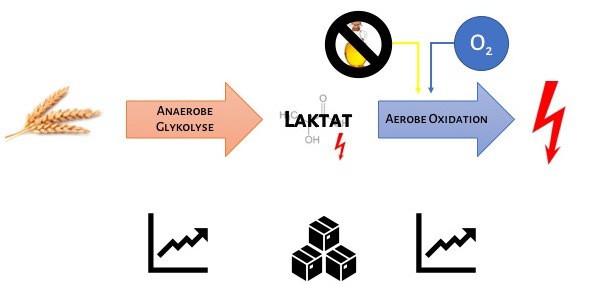 Energiebereitstellung_Szenario 3_Anaerobe Schwelle