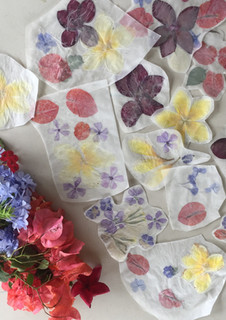 pressed flowers from the garden