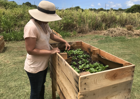 raised beds at varying heights allow for universal accessiblity; creating comfort and access for all are key components of our therapeutic garden design