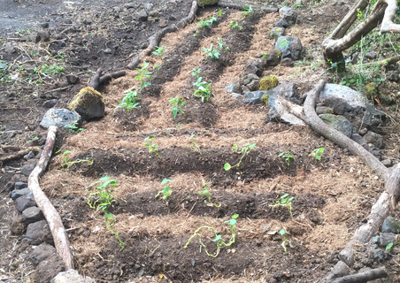 a freshly planted and mulched garden bed