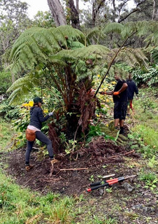 clearing invasive species to allow space for endemic flora to thrive; a recovery group community service project in Kaloko's cloud forest